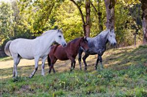 Stages de développement personnel avec le cheval
